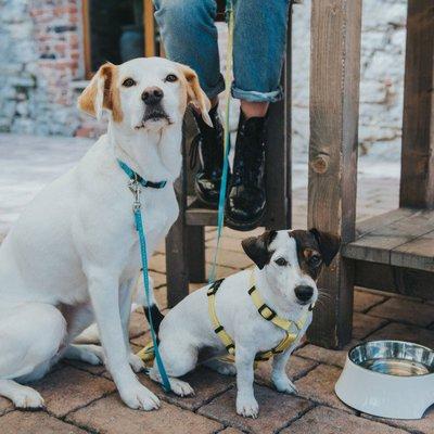 Hunter Verstellbare Führleine Tripoli für kleine Hunde Preview Image
