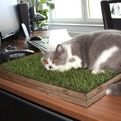 JR Farm Relax Wiese Natur für Katzen Preview Image