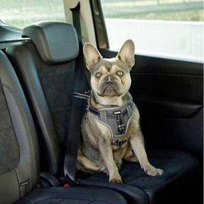 Kerbl Auto Sicherheitsgeschrirr für Hunde Preview Image
