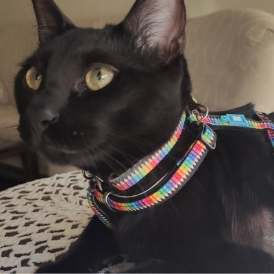 Max & Molly Katzenhalsband Smart ID Preview Image