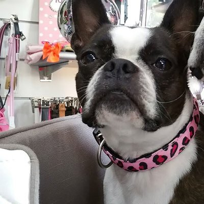 Max & Molly Smart ID Hundehalsband Leopard Pink Preview Image