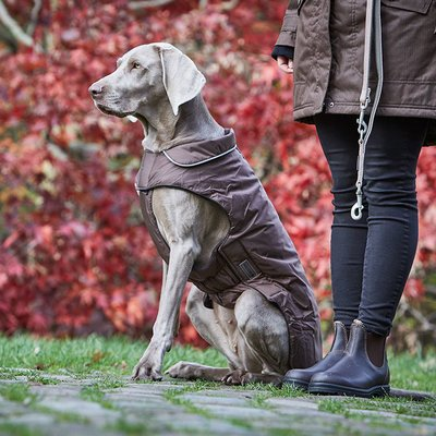 Wolters Outdoorjacke Jack für Hunde Preview Image