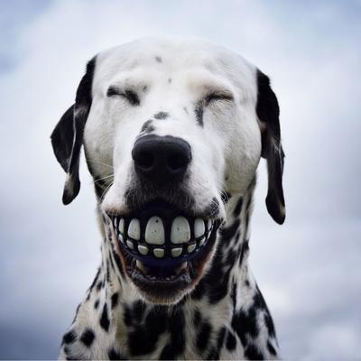 Rogz Grinz Ball für Hunde Preview Image