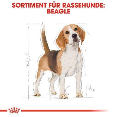 Royal Canin Beagle Adult Hundefutter trocken Preview Image