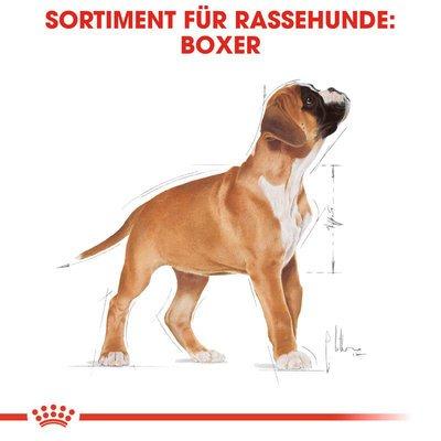 Royal Canin Boxer Puppy Welpenfutter trocken Preview Image