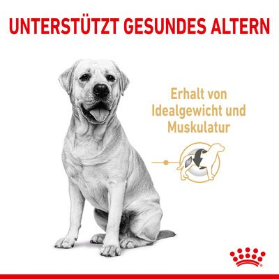 Royal Canin Labrador Retriver Trockenfutter 5+ Preview Image