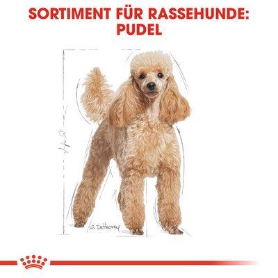 Royal Canin Poodle Adult Hundefutter trocken für Pudel Preview Image