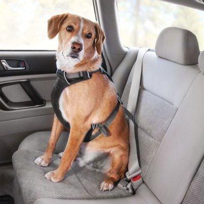 Ruffwear Load Up™ Harness Autogeschirr für Hunde Preview Image