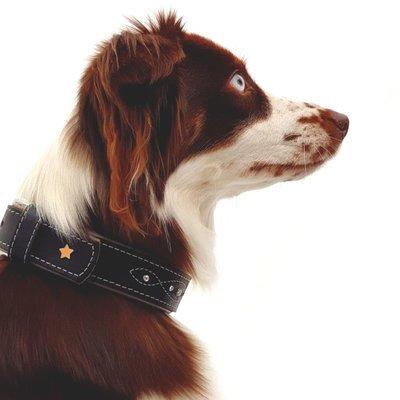 Sternfalbe Lederhalsband für Hunde Preview Image