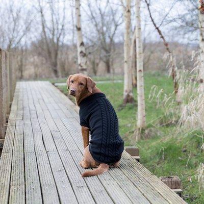 TRIXIE Hundepullover Kenton Preview Image
