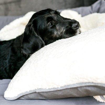 Wolters Green Line Hunde Zusatz-Kissen Bio Preview Image
