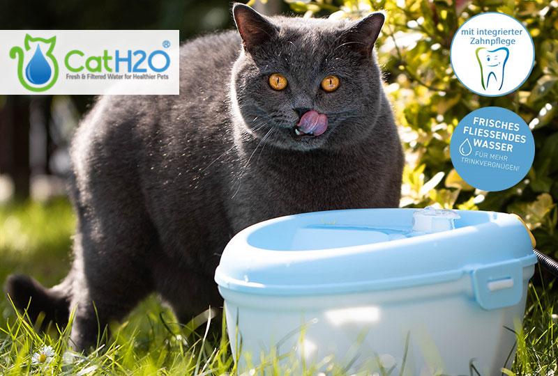 Katzen Trinkbrunnen mit Zahnpflege
