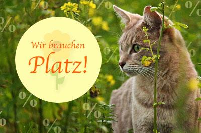 Frühjahrsputz bei tiierisch.de