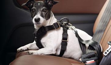 Auto Hundegeschirre