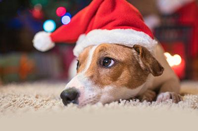 Haustier Weihnachten