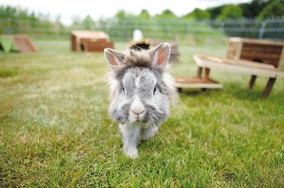 Freilaufgehege für Kaninchen und Meerschweinchen