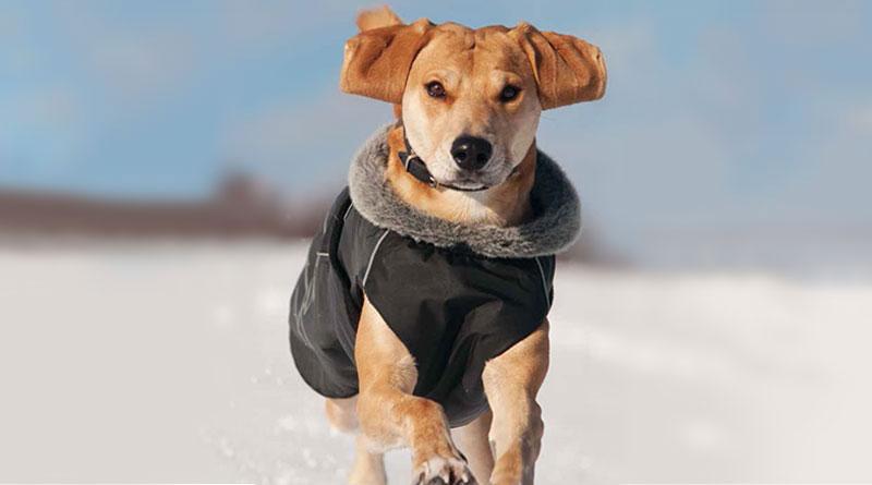 Der Hundemantel - mehr als ein Modegag