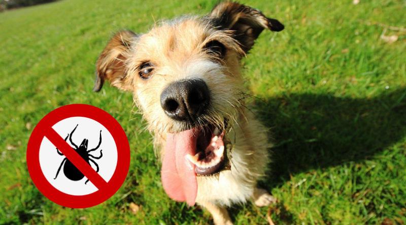 Zeckenabwehr für Hunde