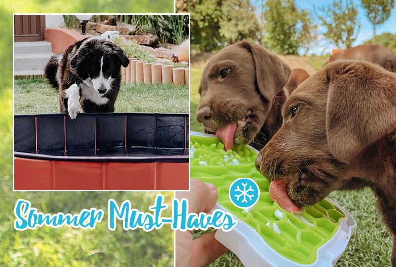 Hunde bei Hitze abkühlen