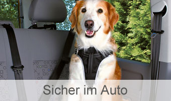Hund sicher im Auto