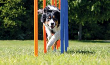 Hunde Ausbildung Erziehung