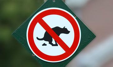 Ungezieferschutz und Zeckenschutz für Hunde