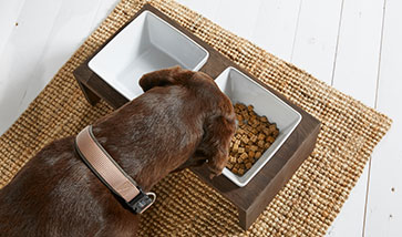 Hundenäpfe und Futterautomaten
