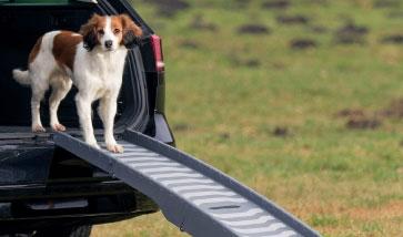 Unterwegs Hunde Transport