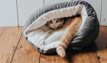 Katzenbetten Katzenhöhlen Shop