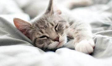 Katzenbetten und Schlafplätze