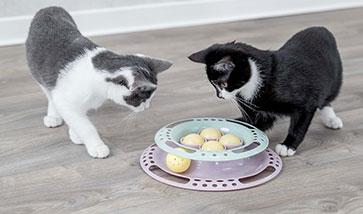 Kitten Zubehör für Kätzchen