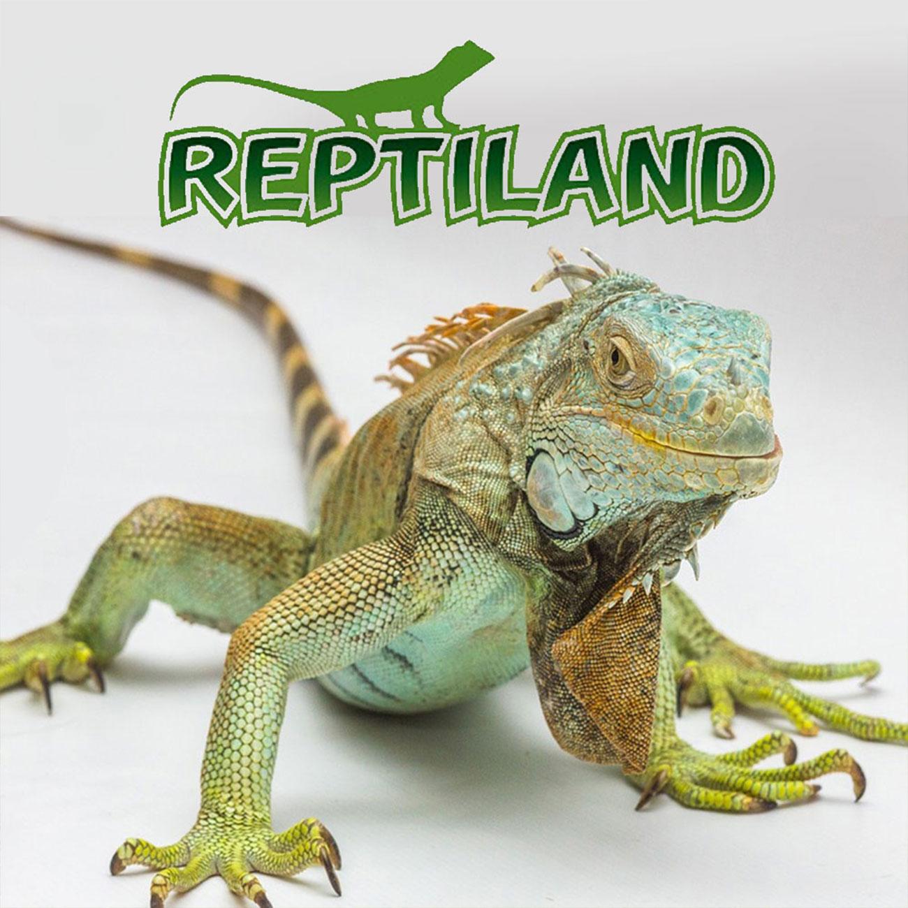 Trixie Reptiland Terraristik