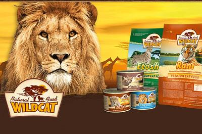 Katzenklappen Katzentüren Online Shop
