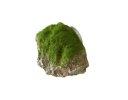 Aqua Della Moss Stone Stein mit Moos XS ca.9x6x6,5cm