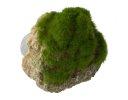 Aqua Della Moss Stone Stein mit Moos S ca.12x9,5x10,5cm