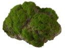 Aqua Della Moss Stone Stein mit Moos L ca.17x11x13,5cm
