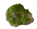 Aqua Della Moss Stone Stein mit Moos M ca.16x11x11cm