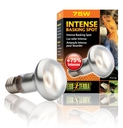 Exo Terra - Intense Wärmespotlampe R20/75W