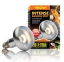 Exo Terra - Intense Wärmespotlampe R30/150W